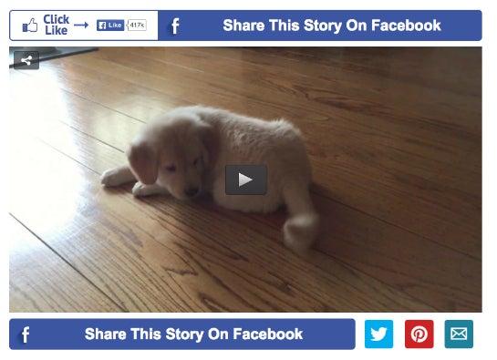 Tiere und Social, das passt zusammen. Mit fetten Bannern rund um die Videos will LittleThings seine Nutzer zum Sharen und Liken bringen. (Foto: LittleThings)
